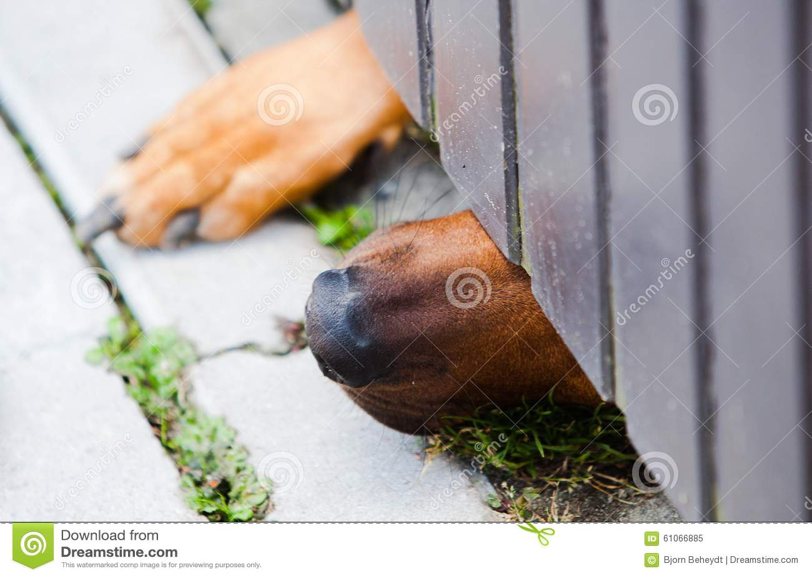 Pies i drzwi