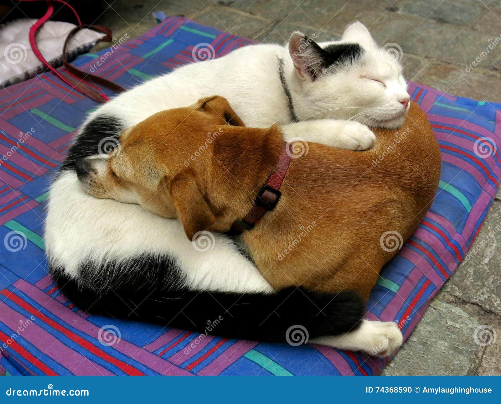 Pies I Kot Fryzujący Up Jak Yin I Yang Zdjęcie Stock Obraz