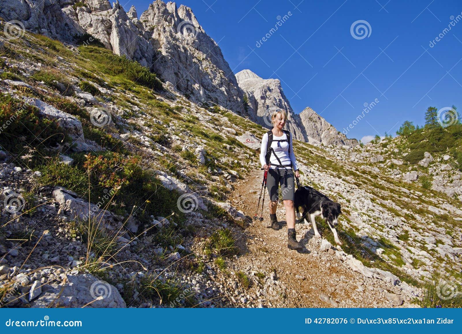 Pies na pieszą wycieczkę