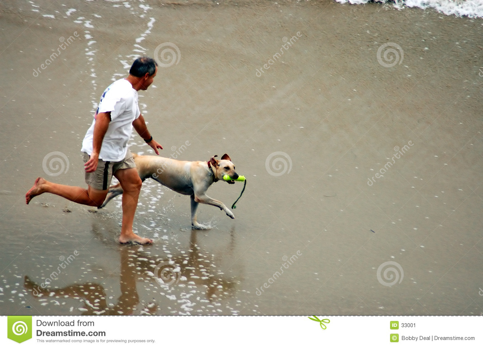 Pies na plaży ludzie