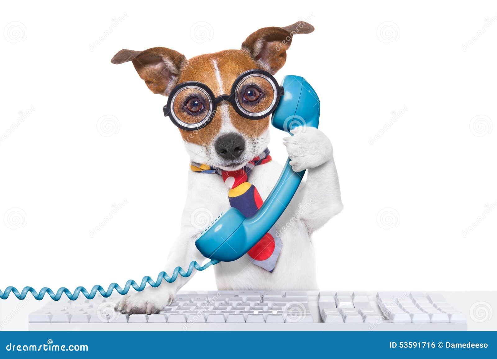 Pies na telefonie
