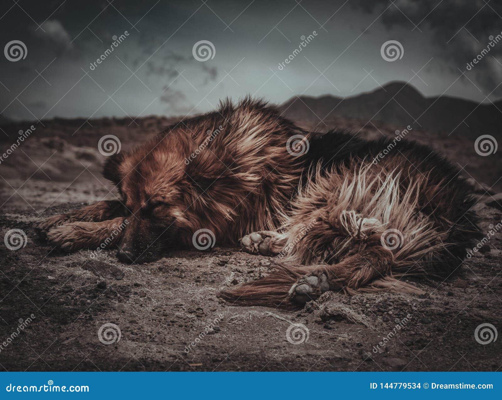 Pies Odpoczywa w Patagonia