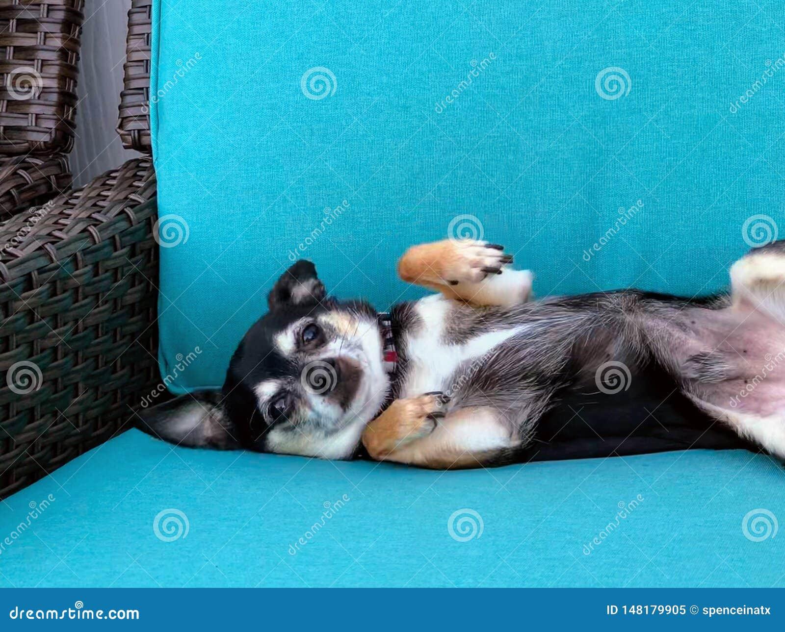 Pies relaksuje w krześle