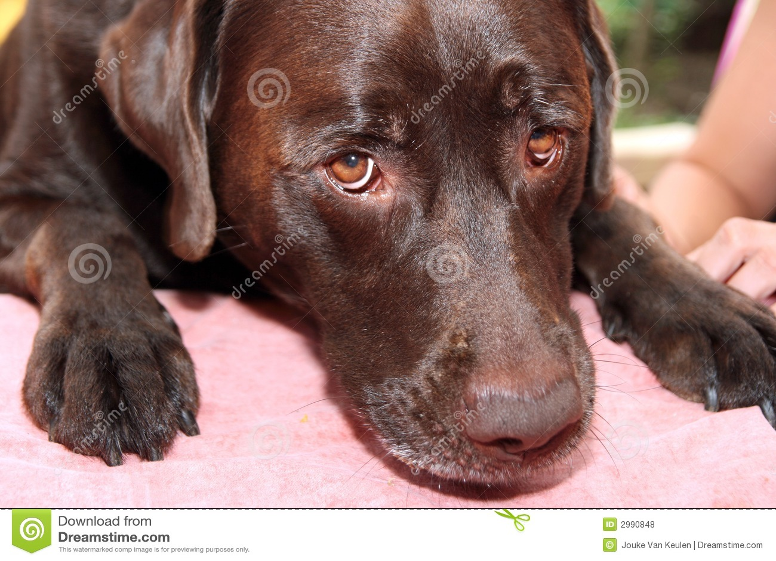 Pies się smutny