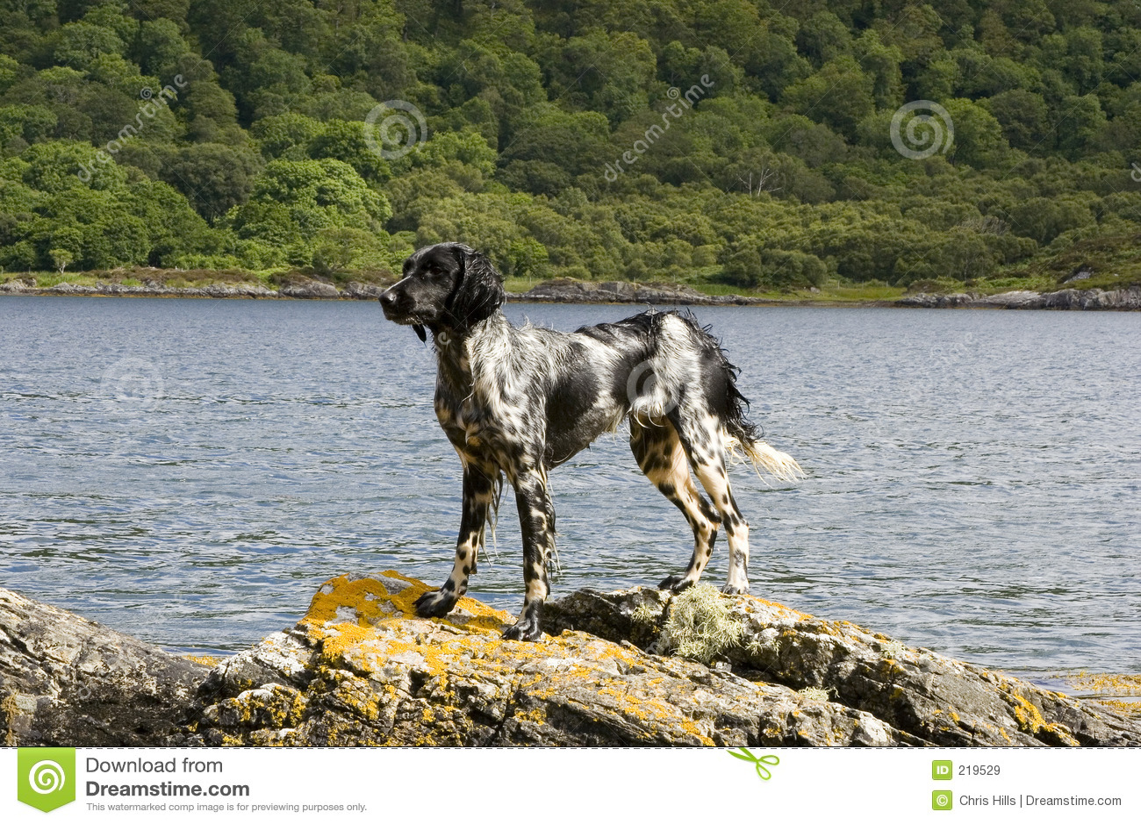 Pies skał