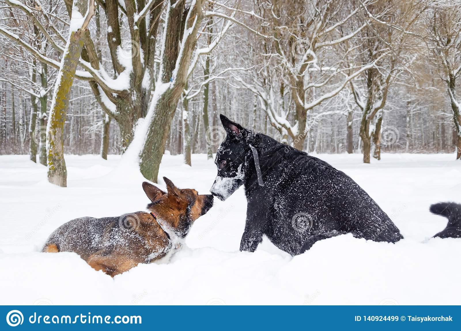 Pies sztuka z each inny