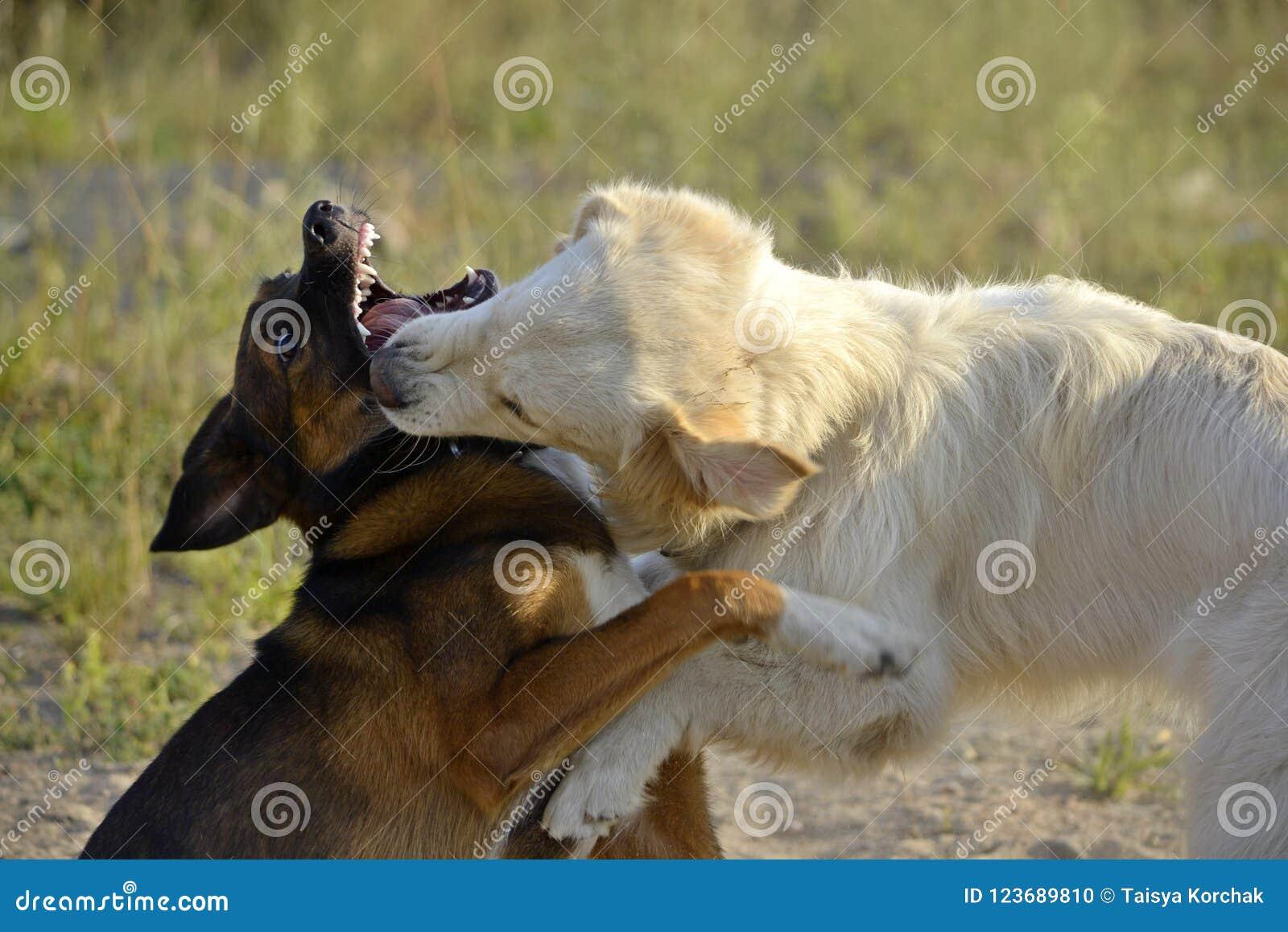 Pies sztuka z each inny tła psi szary labradora szczeniaka tyły aporteru widok