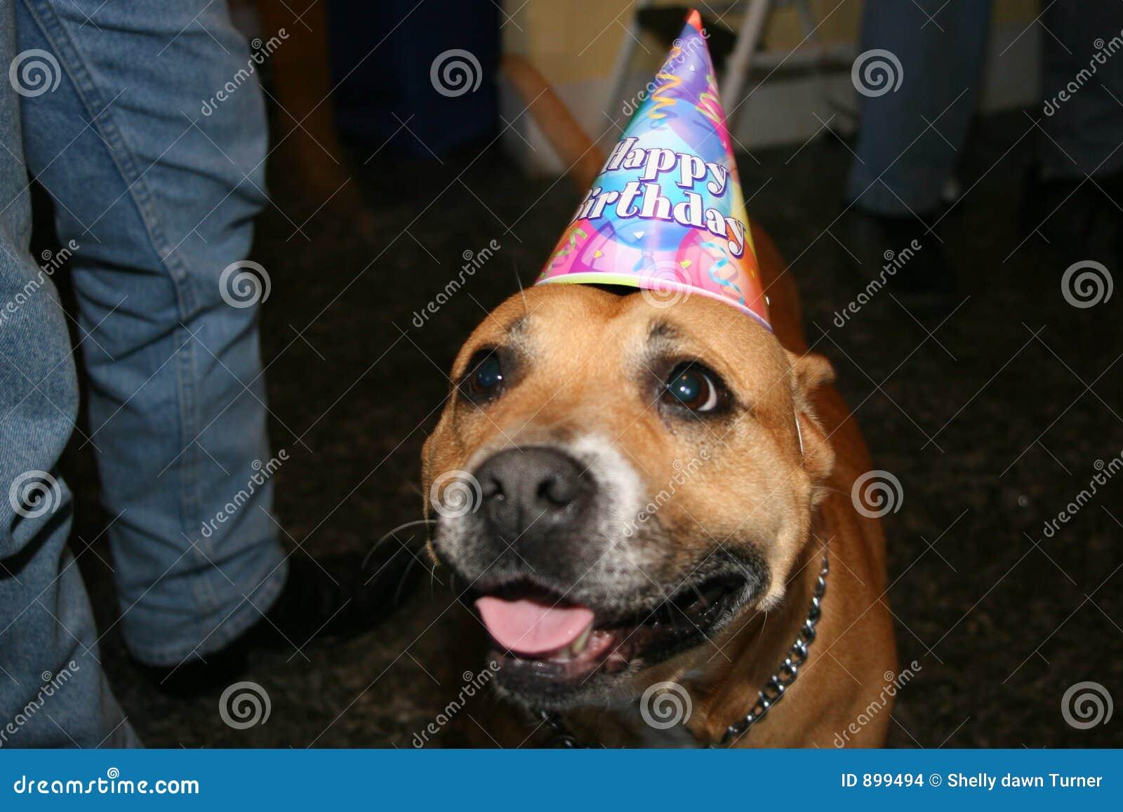 Pies urodzin