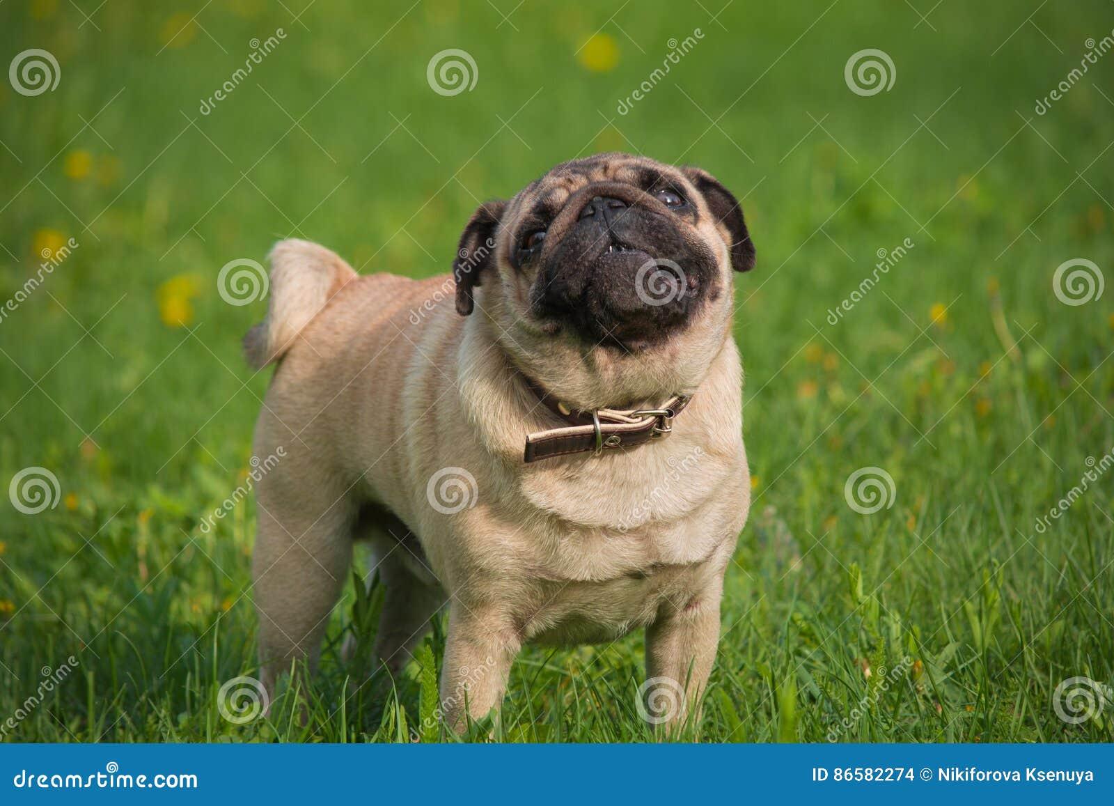 Pies w łące
