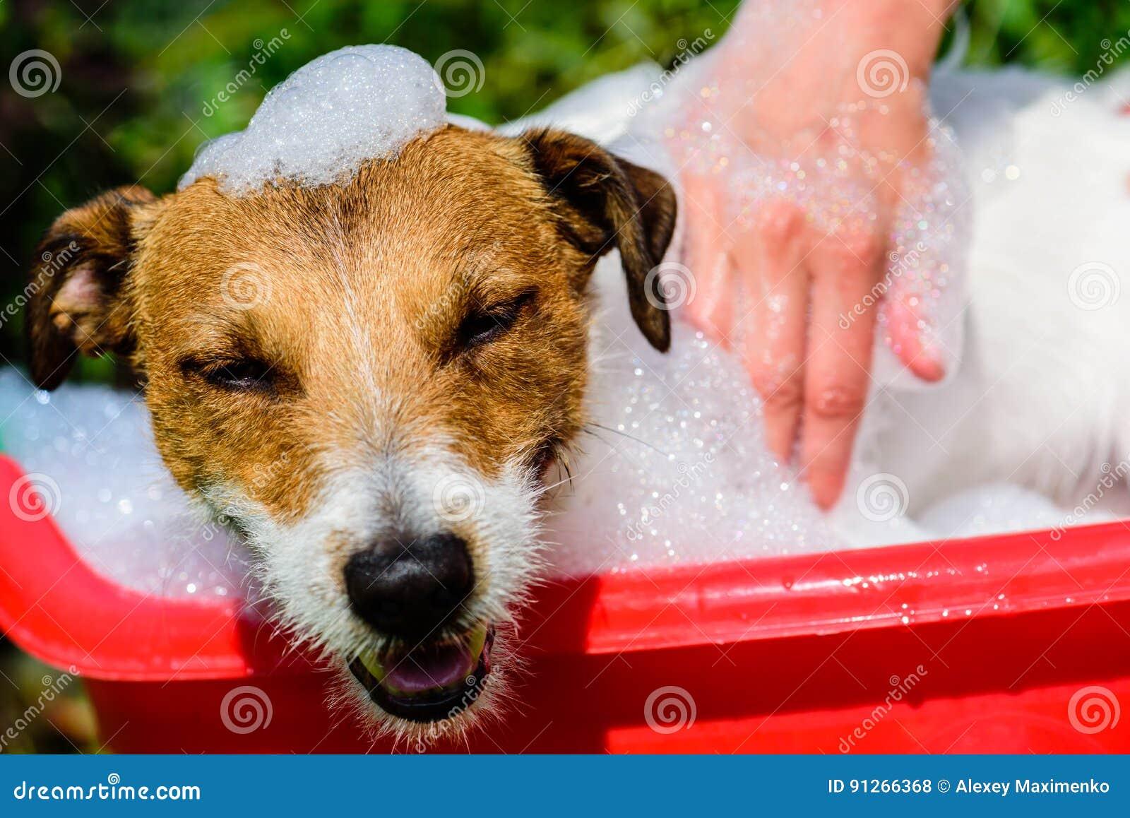 Pies w basenowy pełnym mydło piana przyjemność bierze skąpanie