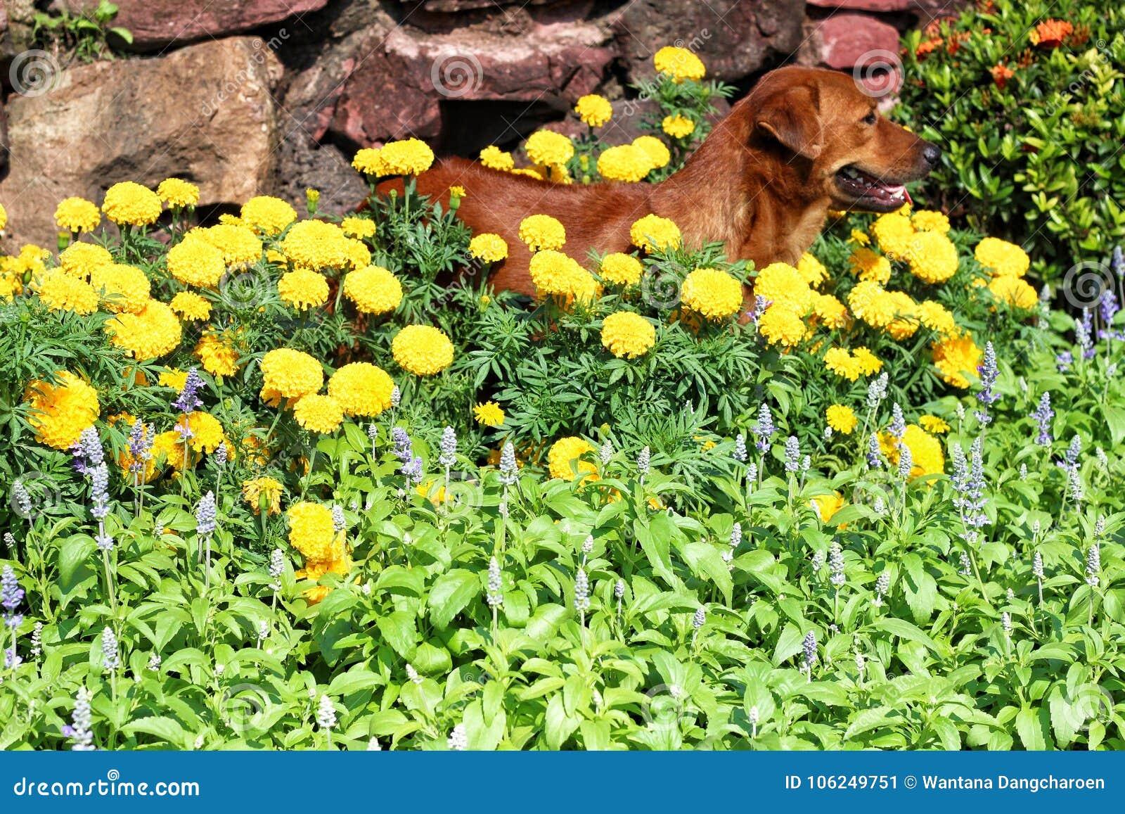 Pies w ogródzie
