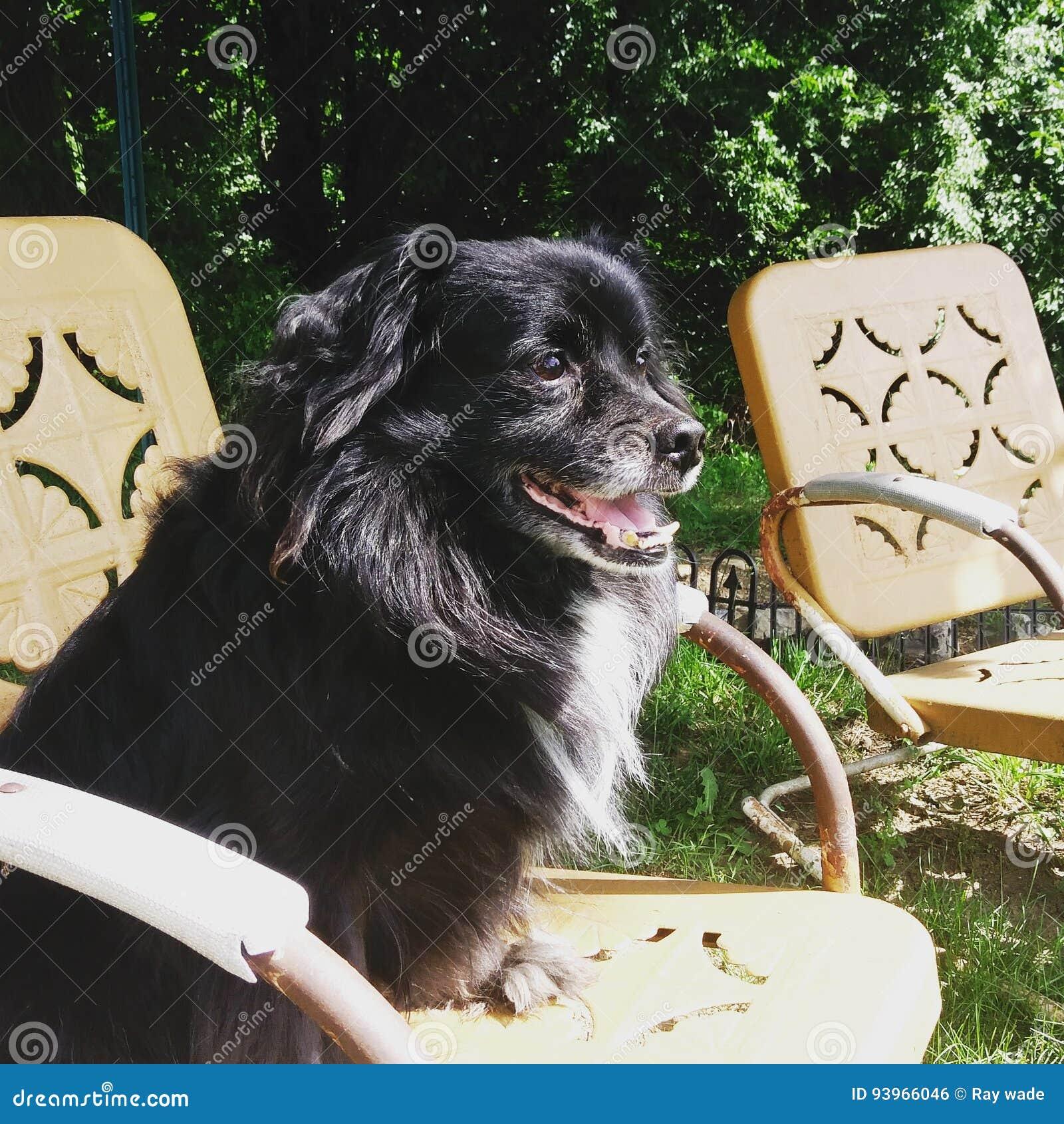 Pies w słońcu