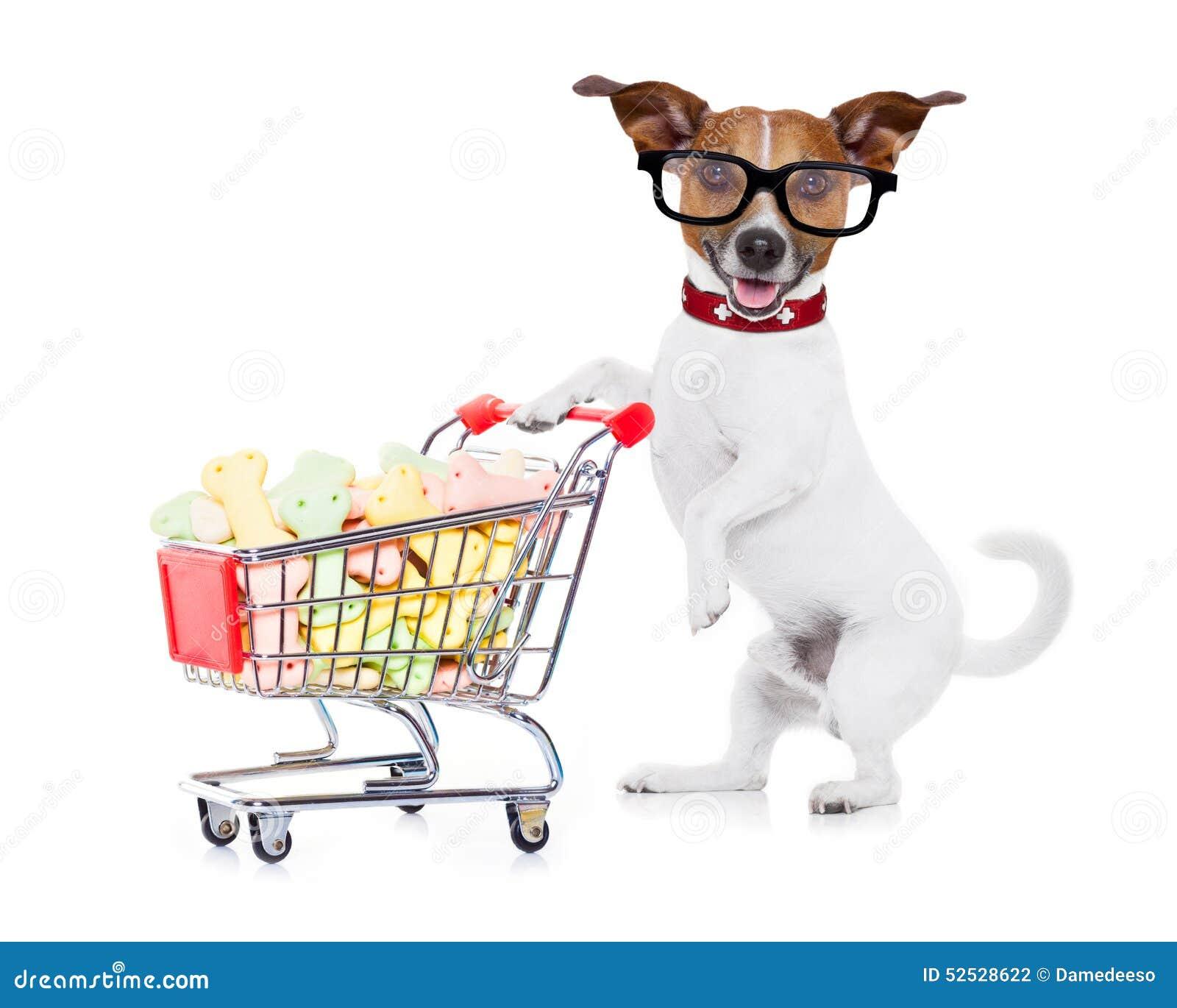 Pies z wózek na zakupy