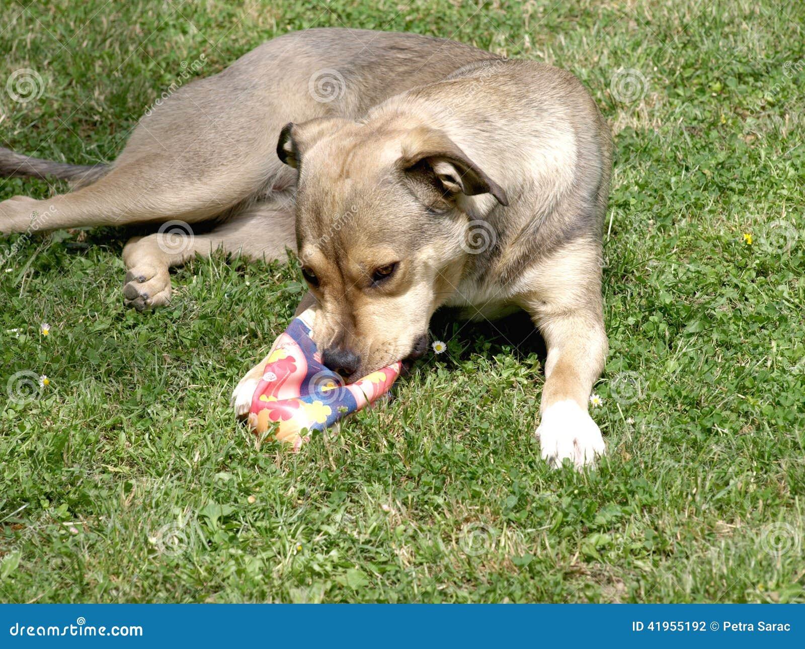 Pies z zabawk?