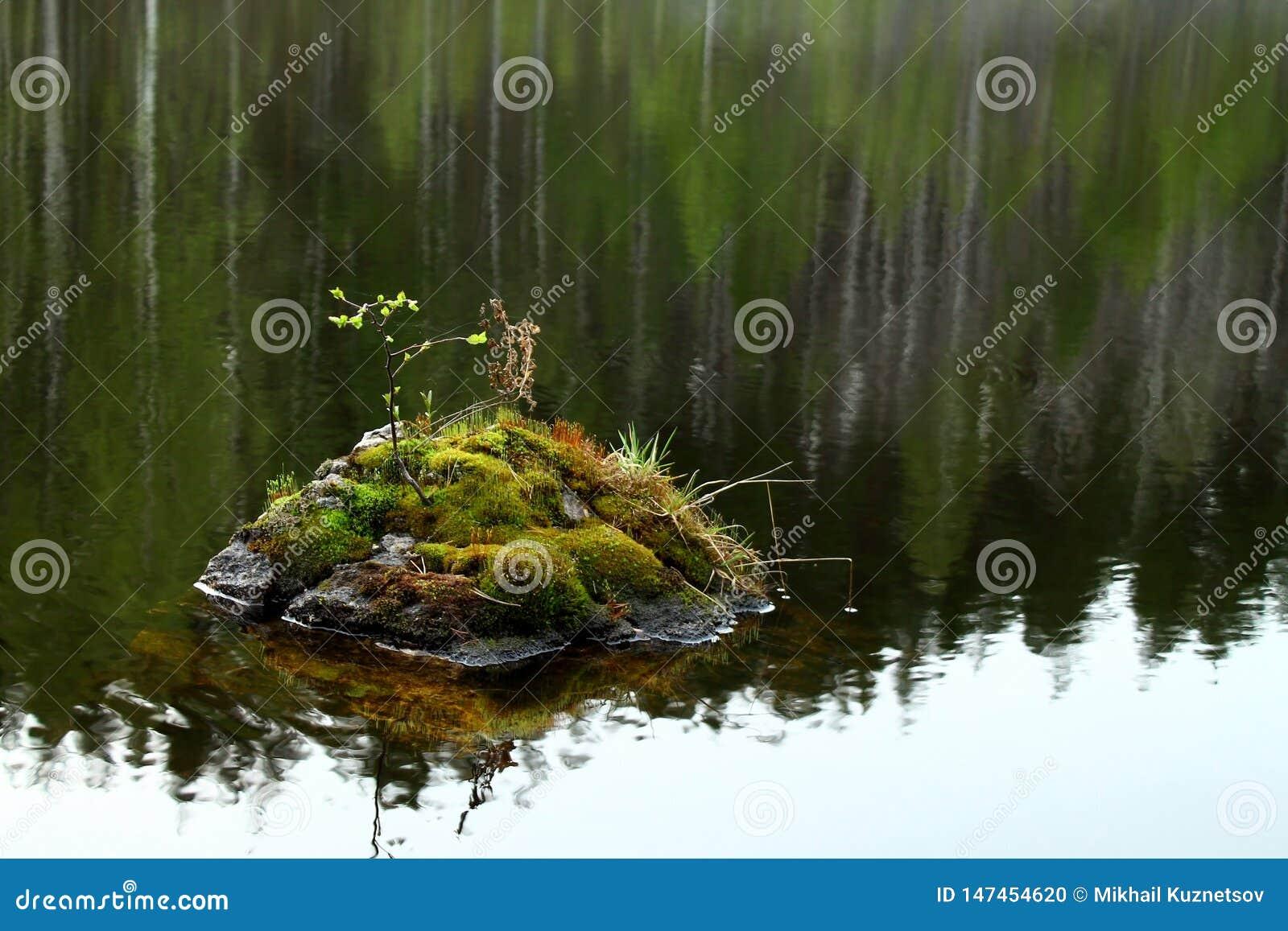 Pietra con muschio e le foglie dentro il fiume
