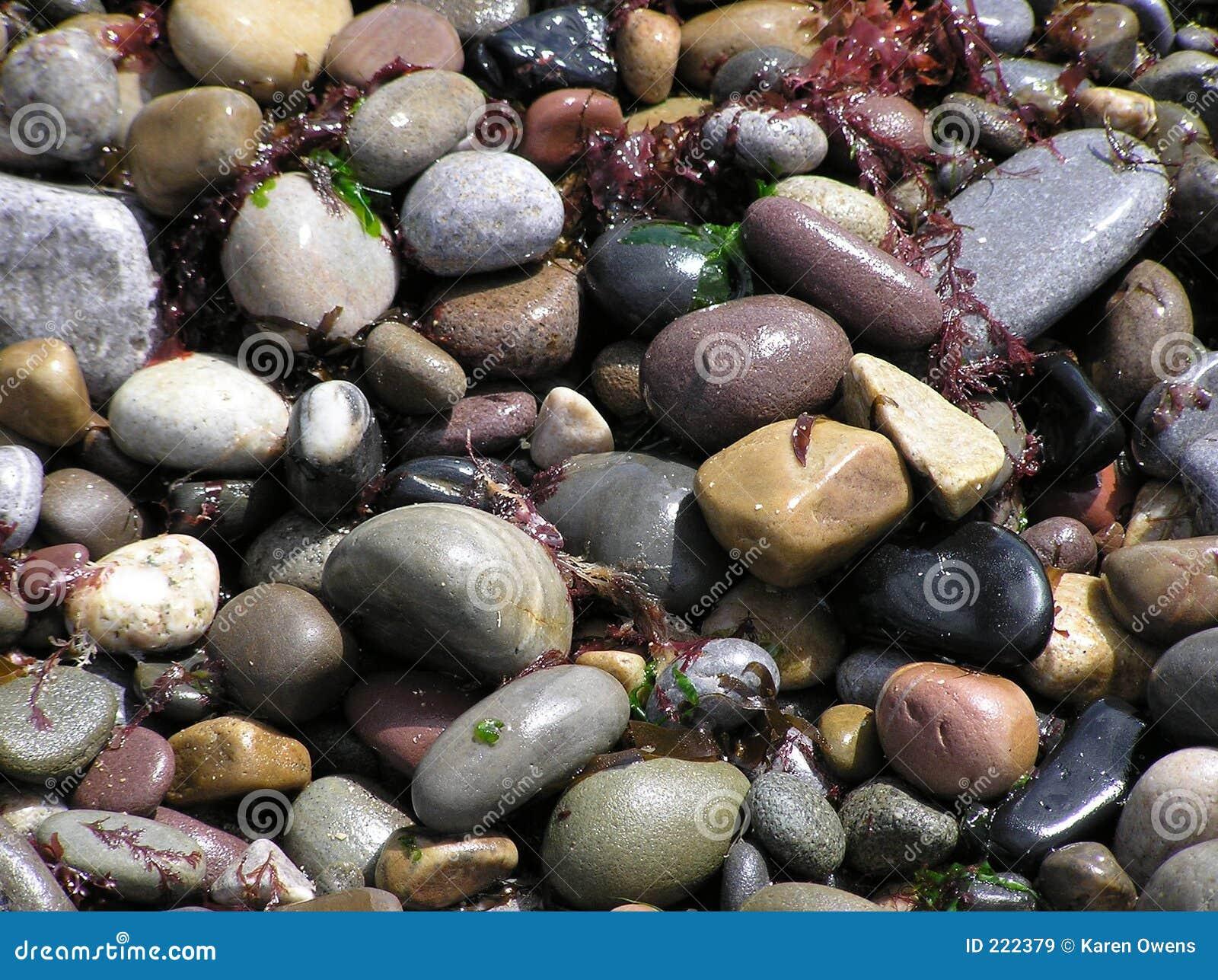 Pietre bagnate della spiaggia