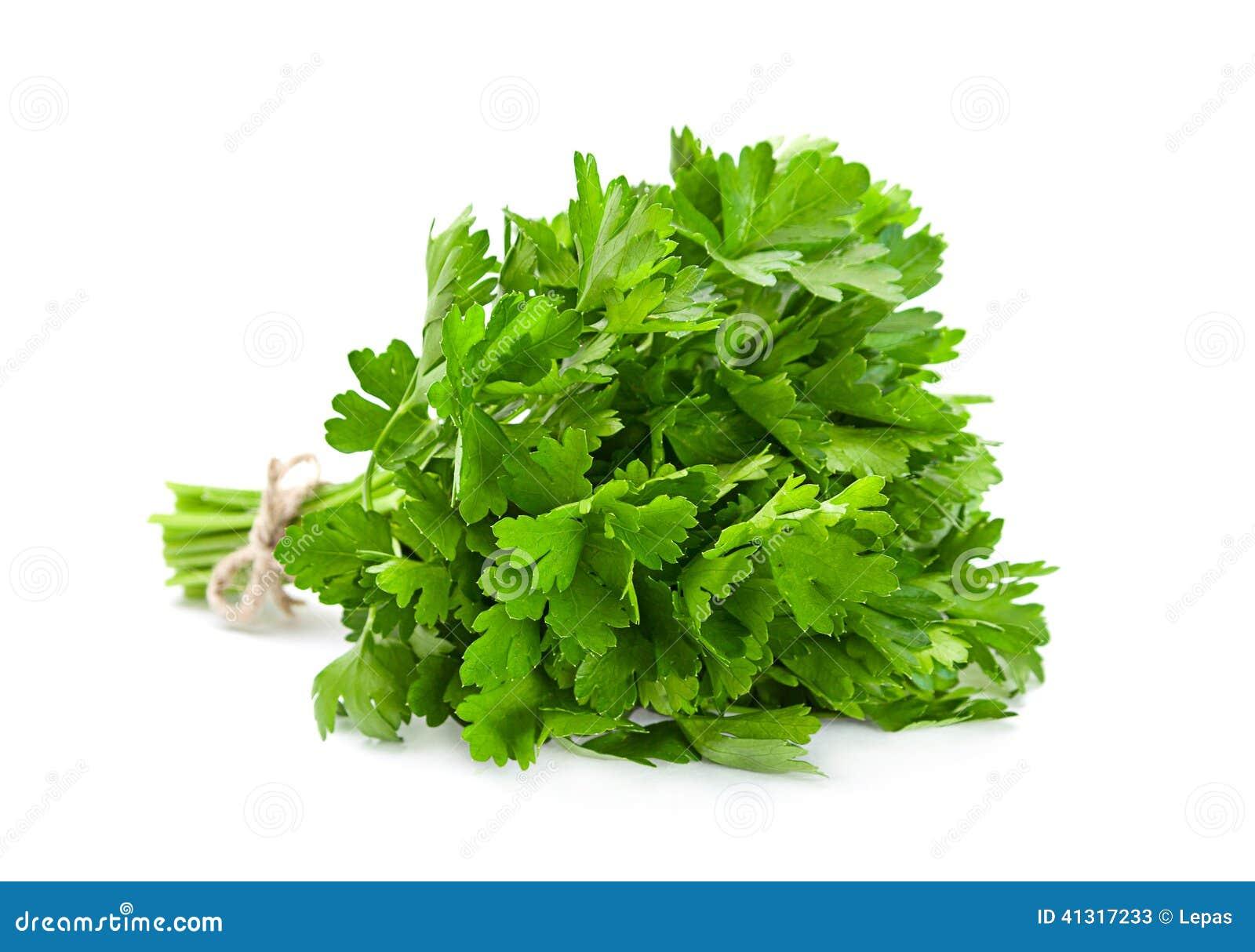 Pietruszki aromatyczny ziele