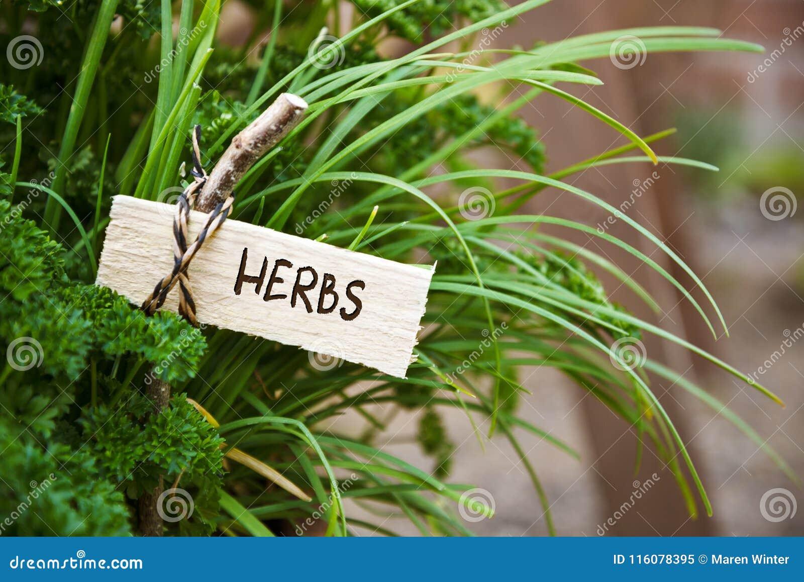 Pietruszki i społeczeństwa czosnek z markierem przylepiającym etykietkę ziele, ogrodowy co
