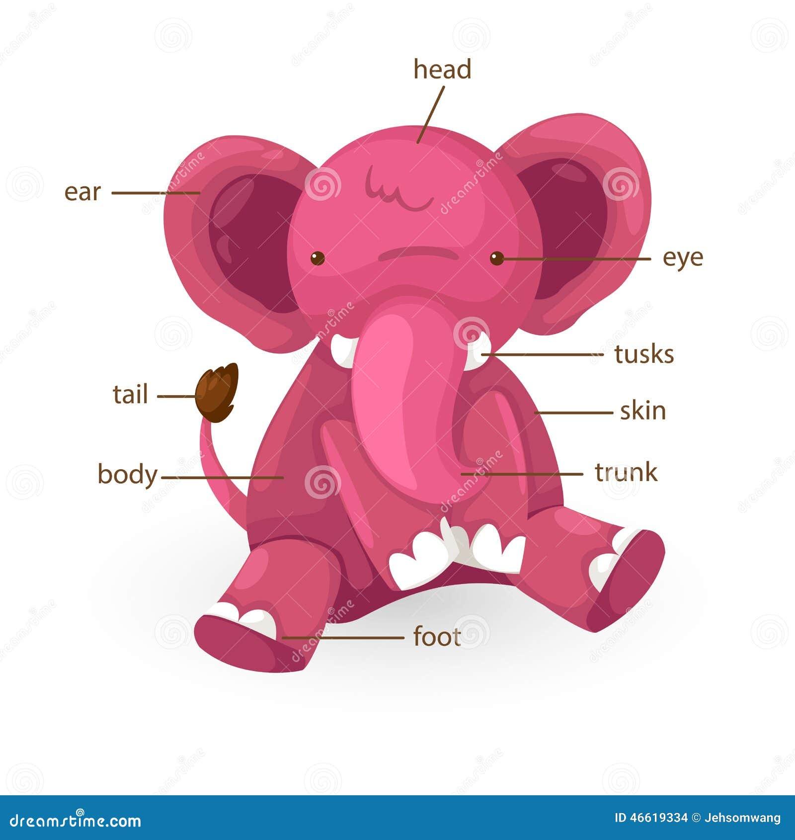 Pieza Del Vocabulario Del Elefante Del Vector Del Cuerpo Ilustración ...