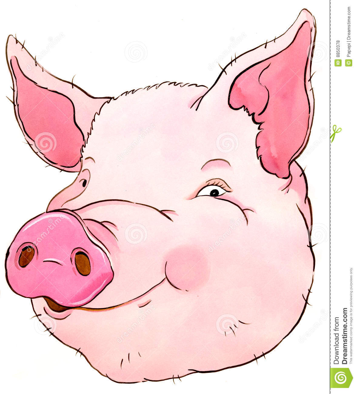 Pig Royalty Free Stock Photos Image 8850378