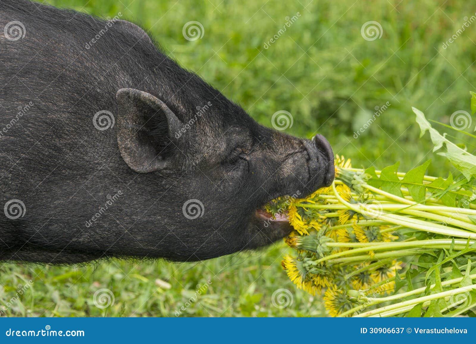 pig black holes - photo #4