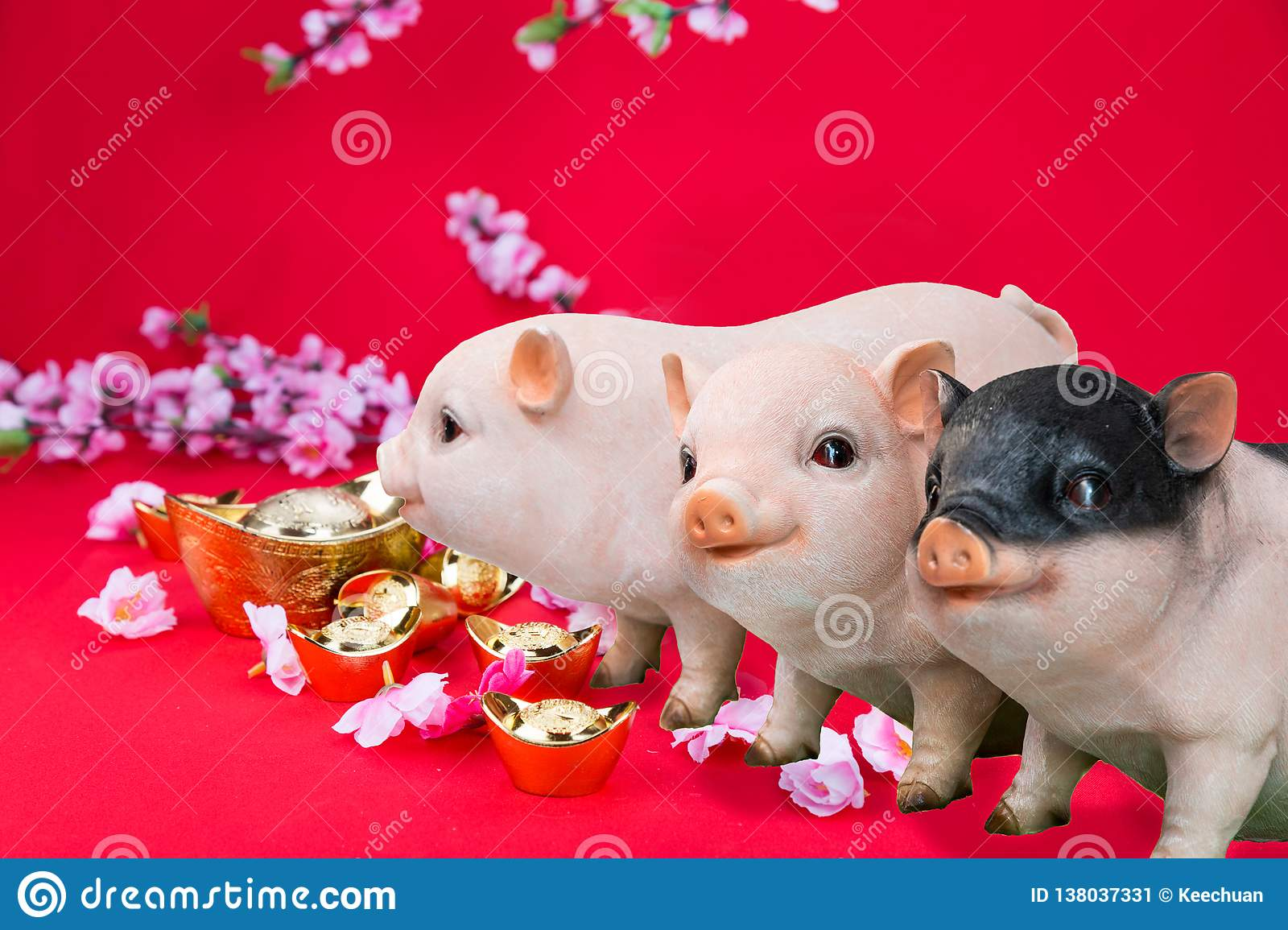 Pig boar with cherry blossom flower, 2019 Chinese New Year