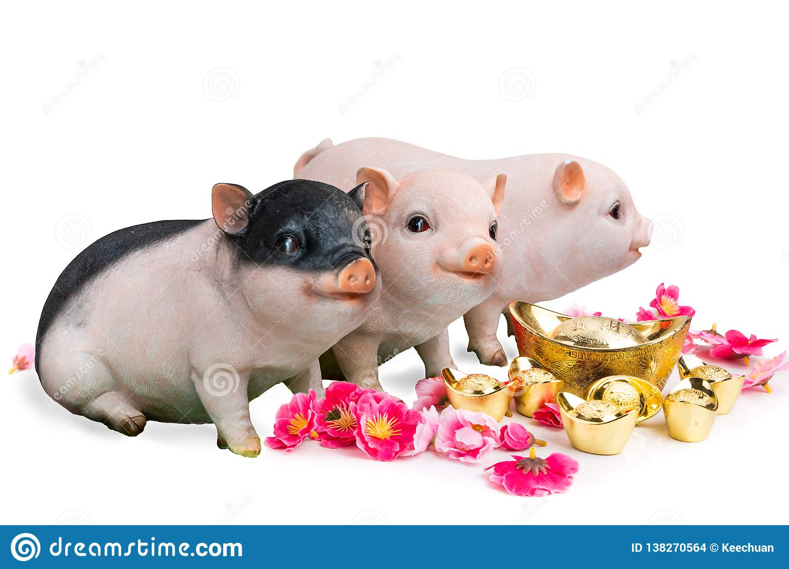 Pig boar with cherry blossom flower, 2019 Chinese New Year zodiac