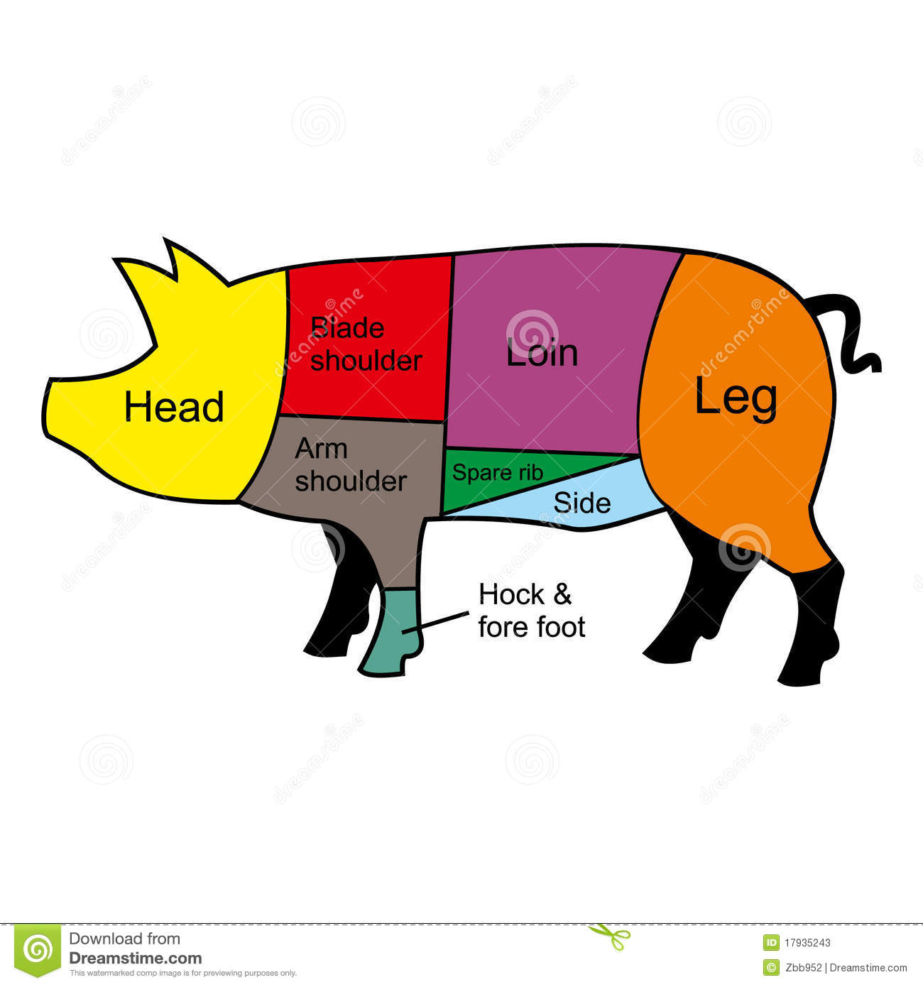 Pig Pork Cuts Diagram Free Image About Wiring And Schematic Arm Browse Data