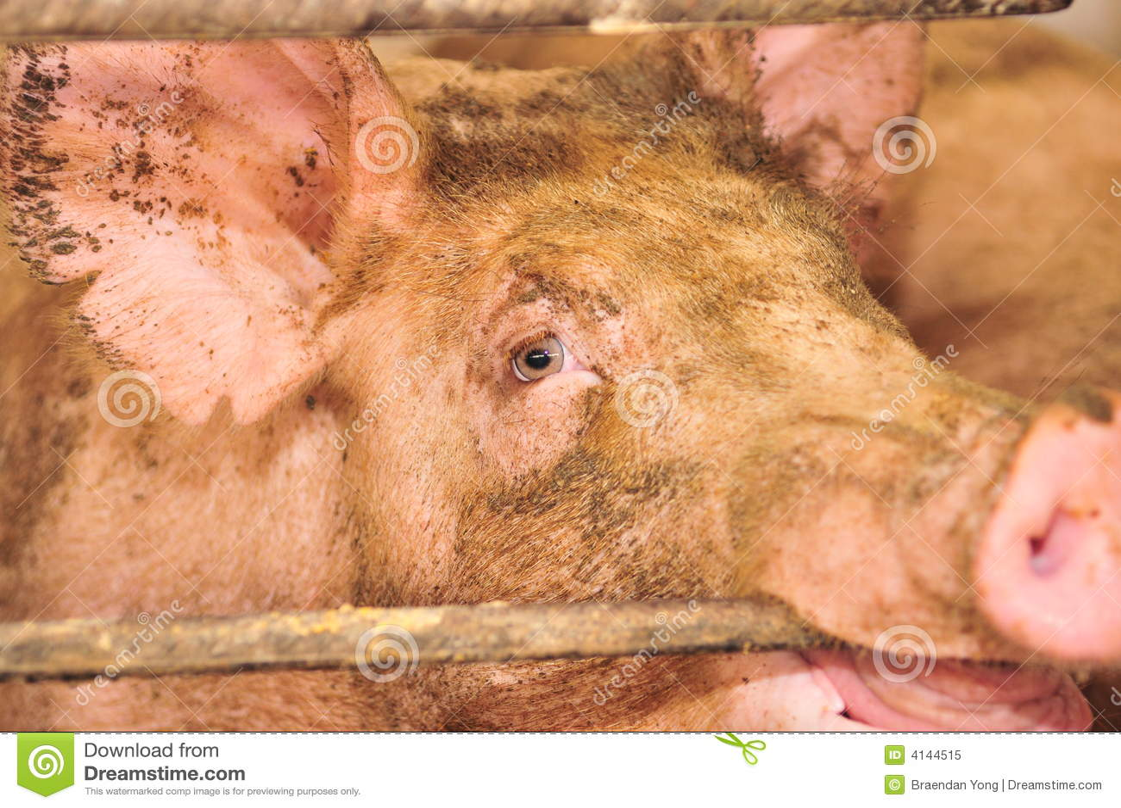 Pig woman sx vГdeo donlod porn videos