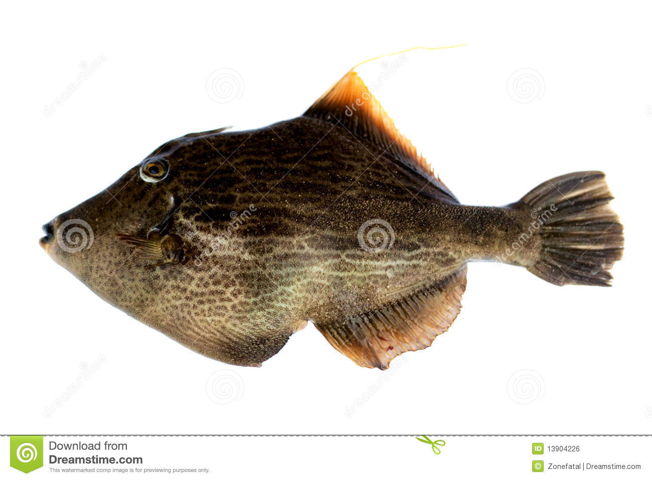 Pig fish stock photo image of dining freshness eating for Dreaming of eating fish