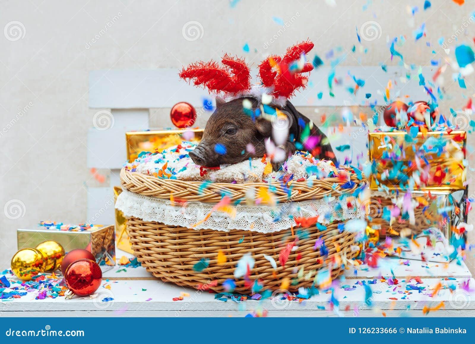 Download Pig Piglet Little Black Basket Wicker Cute Vietnamese Breed New Year Happy Christmas Tree Decorations
