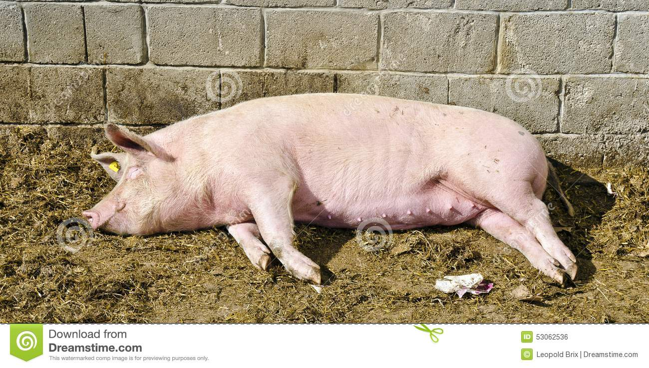 Squealer - This Is What The World Is All About