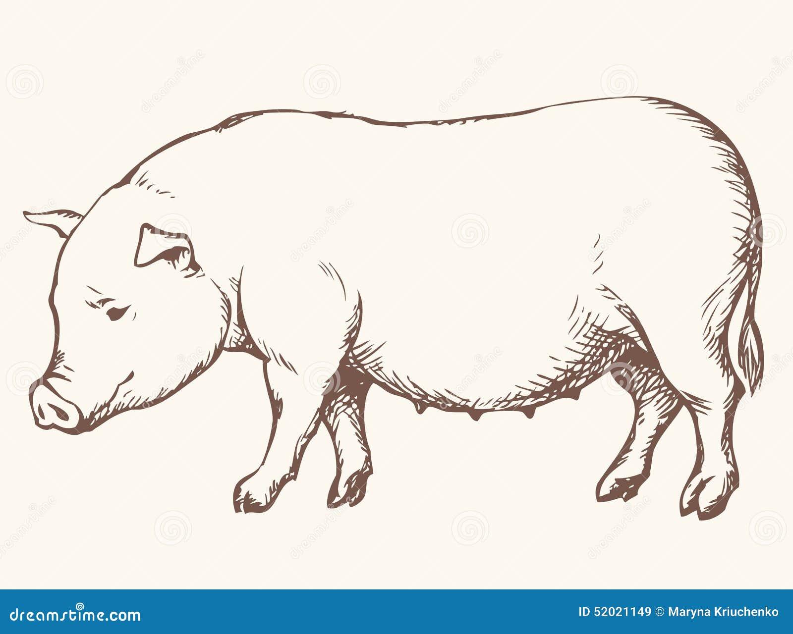Pig drawing - photo#28