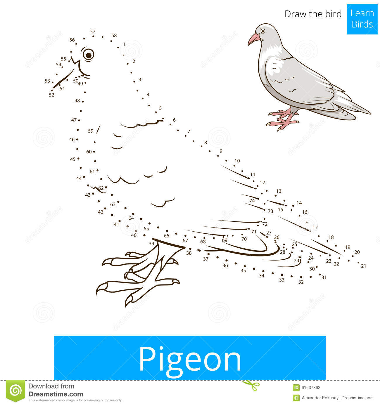 Pigeon Bird Learn To Draw Vector Stock Vector Illustration Of