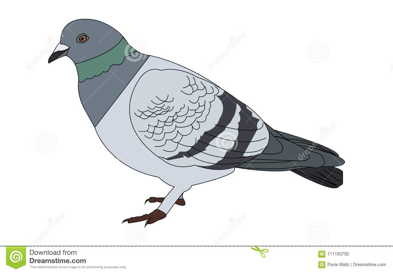 Pigeon illustration - photo#37
