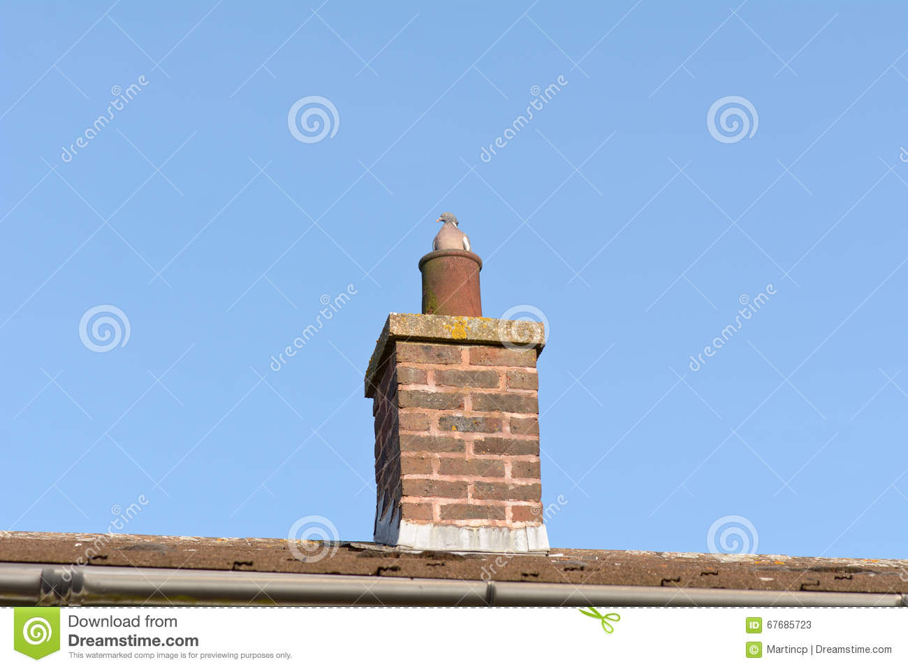 pigeon (columbidae) sitting in chimney pot on roof of house