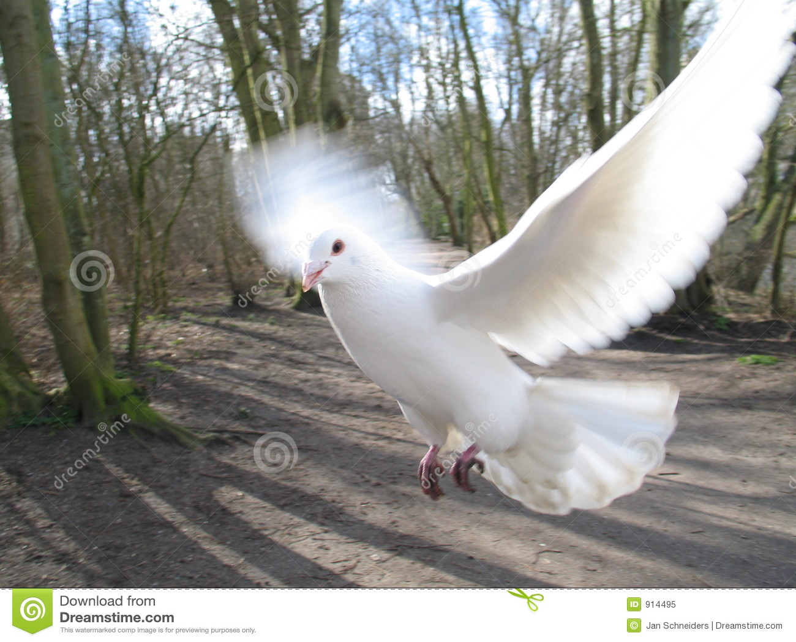 Pigeon de vol