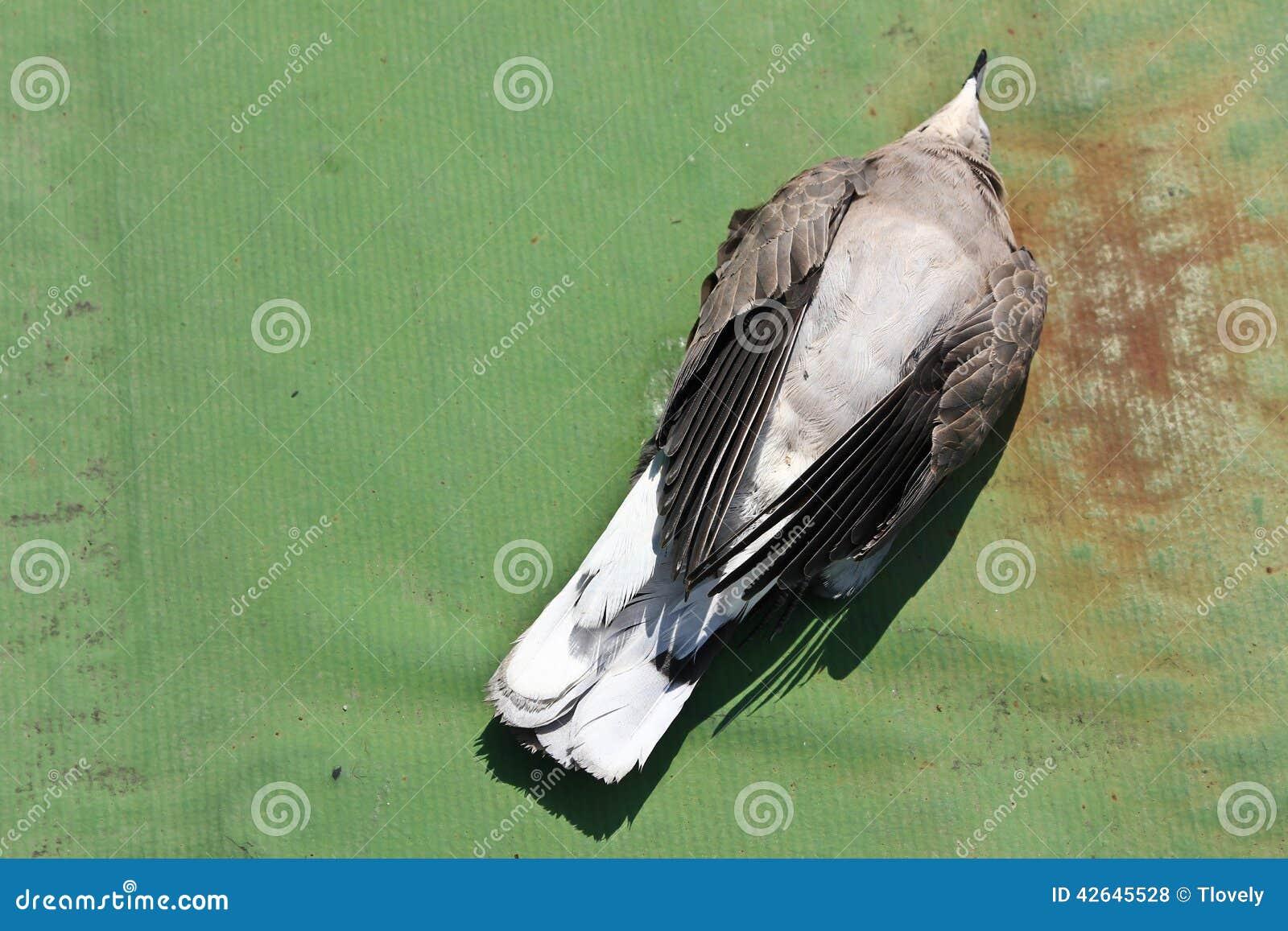 pigeon empoisonn par les graines trait es photo stock image du pesticide nature 42645528. Black Bedroom Furniture Sets. Home Design Ideas