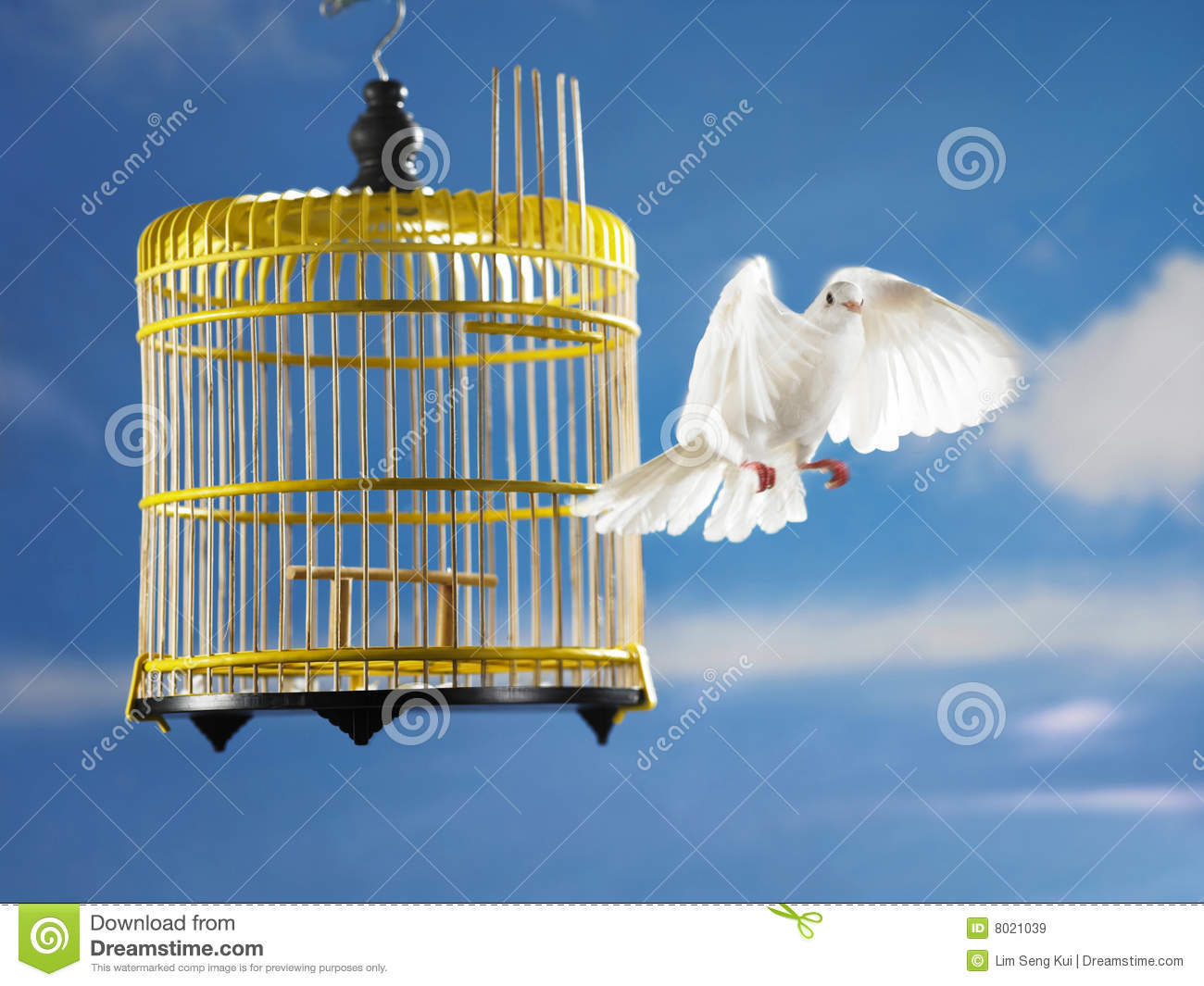 Royalty Free Stock Images  Pigeon escape from cage for freedomBird Freedom From Cage