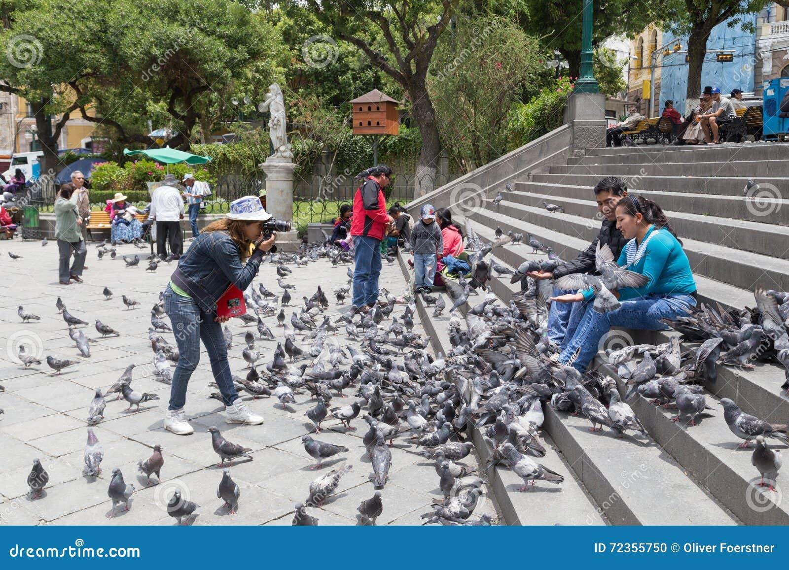 Pigeon feeding on Plaza Murillo in La Paz, Bolivia