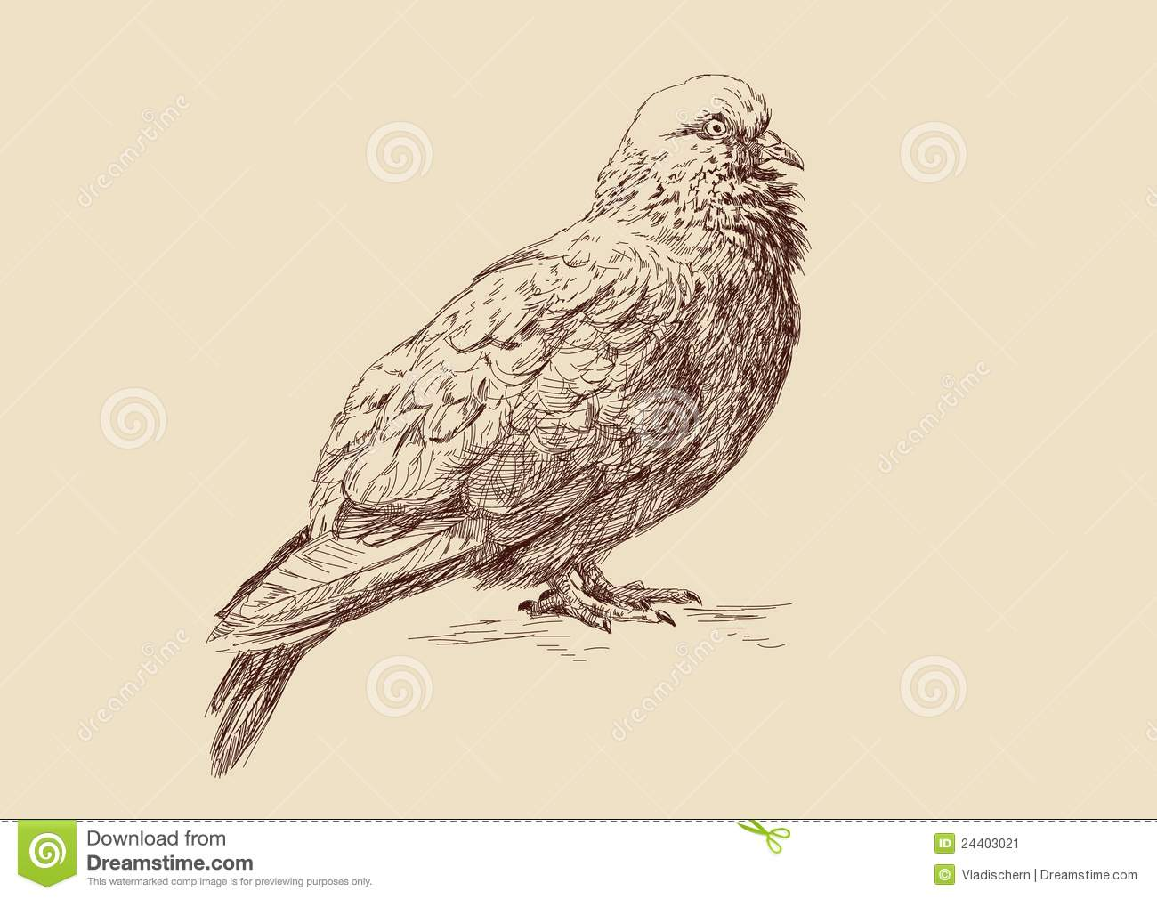 Pigeon illustration - photo#15