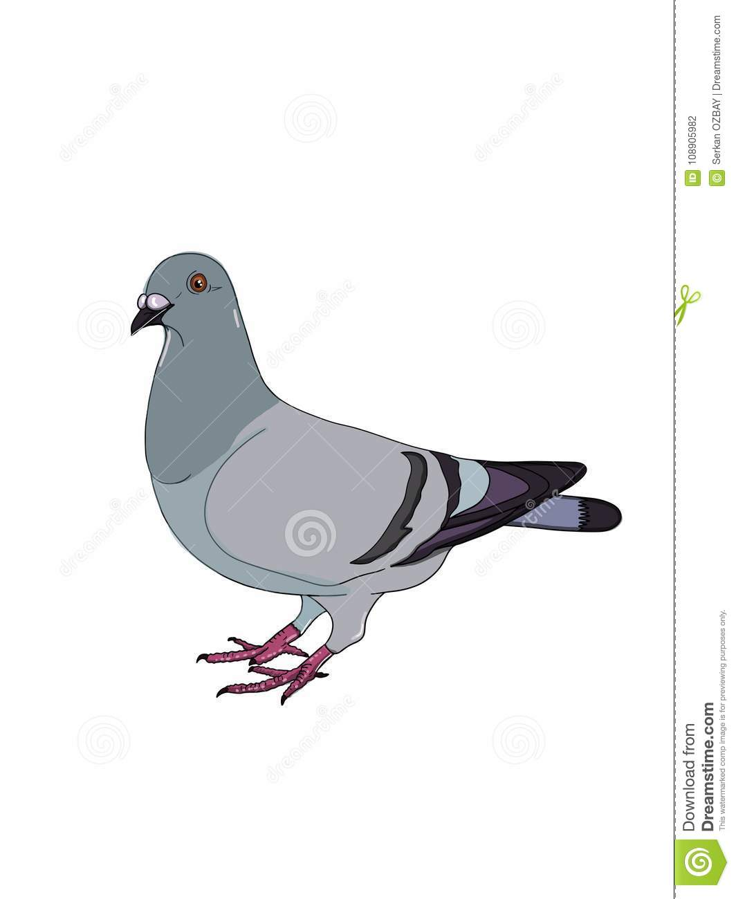 Pigeon illustration drawing and white background drawing cartoon and white background cartoon - Dessin pigeon ...