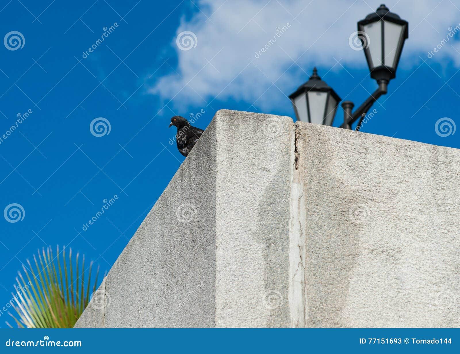 Pigeon, lampe et paume