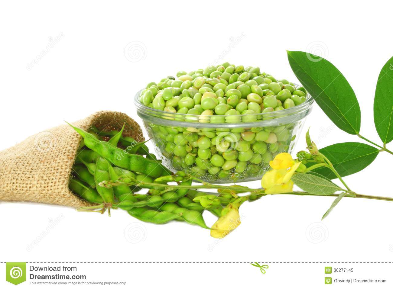 pigeon peas with leaves