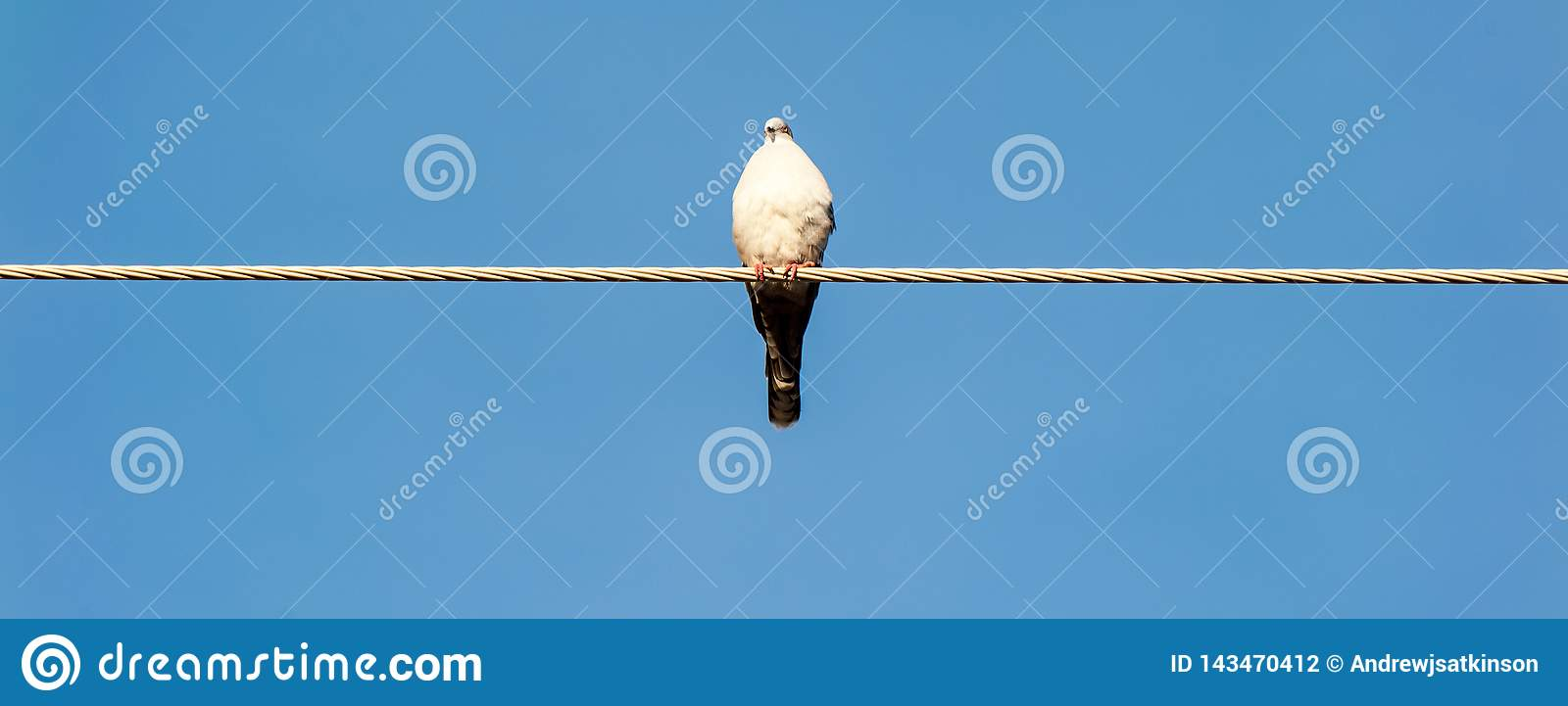 Pigeon sitting on a wire with blue sky as backdrop