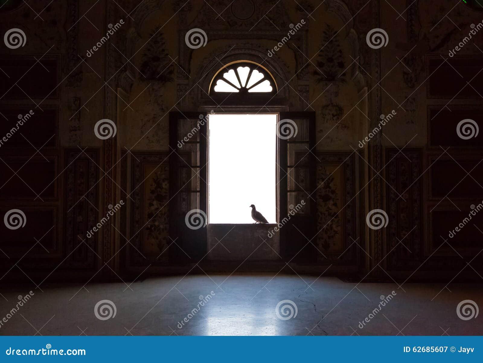 Pigeon on the window