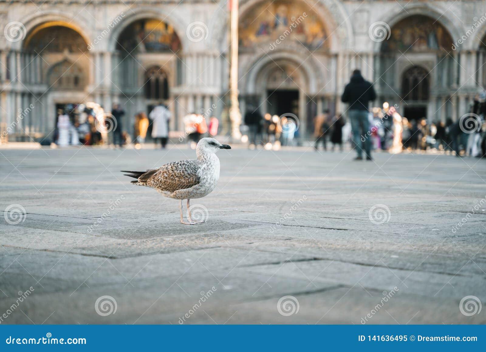 Pigeone стоя на улице