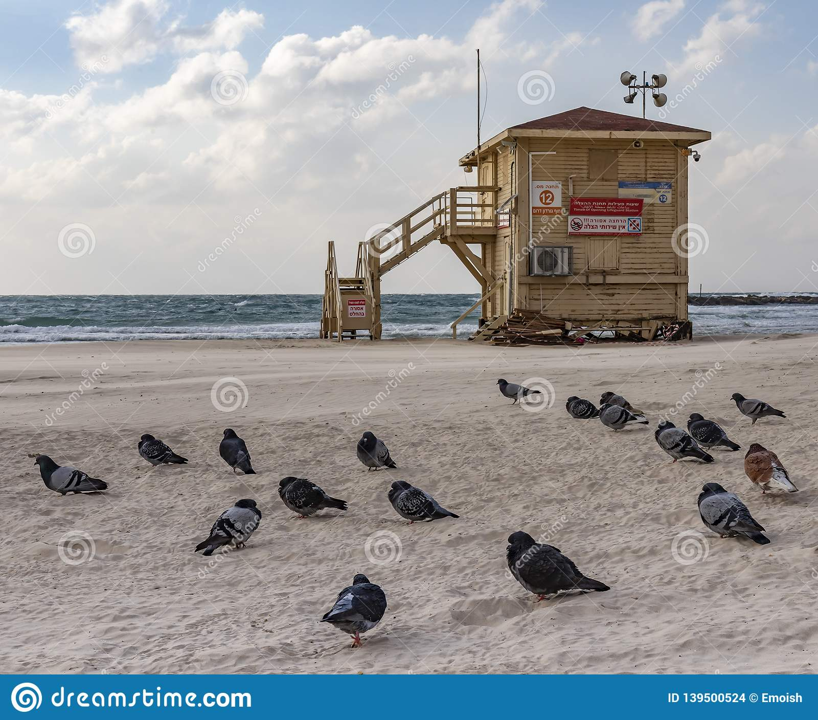 Pigeons and a Closed Lifeguard Shack on a Deserted Beach