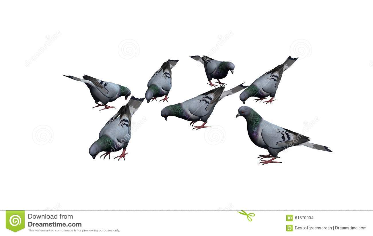 Pigeon illustration - photo#40