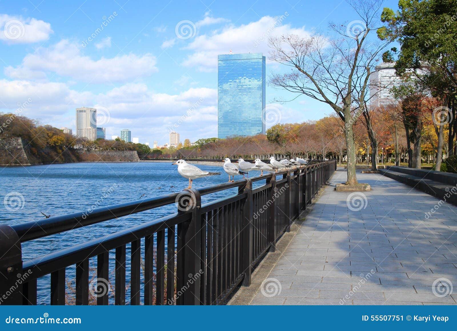 Seagulls Japan Osaka Castle Stock Image Image Of Lake Blue 55507751